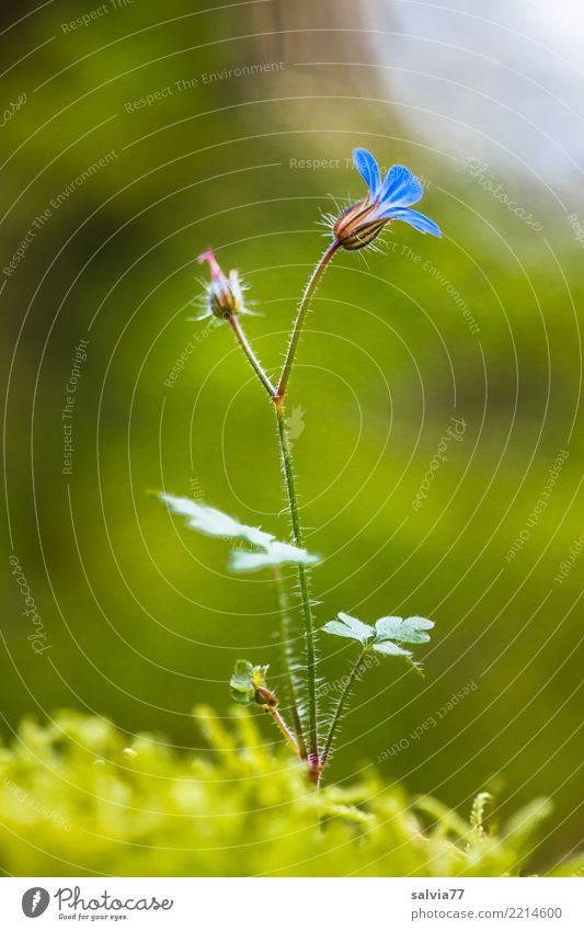 Flowerlets delicate and fine Environment Nature Plant Summer Moss Blossom Forest Blossoming Growth Esthetic Soft Blue Green Fragrance Loneliness Happy Hope