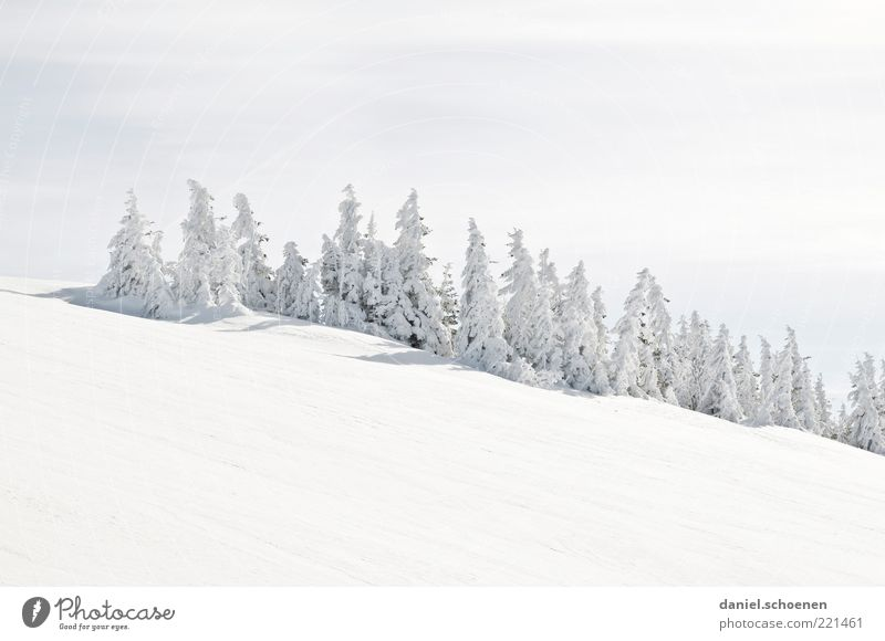 many Christmas trees Winter Snow Mountain Beautiful weather Ice Frost Hill Bright White Fir tree Black Forest Black Forest mountain Subdued colour