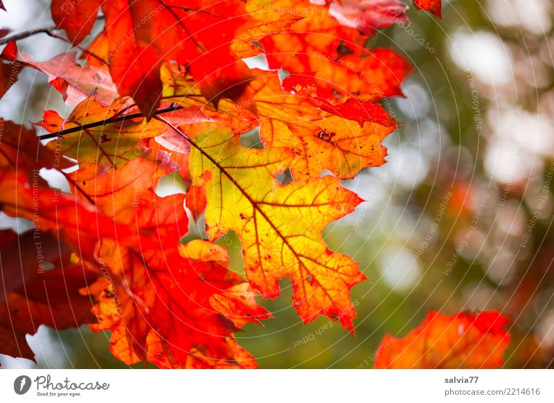 Nature Plant Beautiful Green Tree Red Leaf Forest Warmth Yellow Environment Autumn Orange Illuminate Park Esthetic