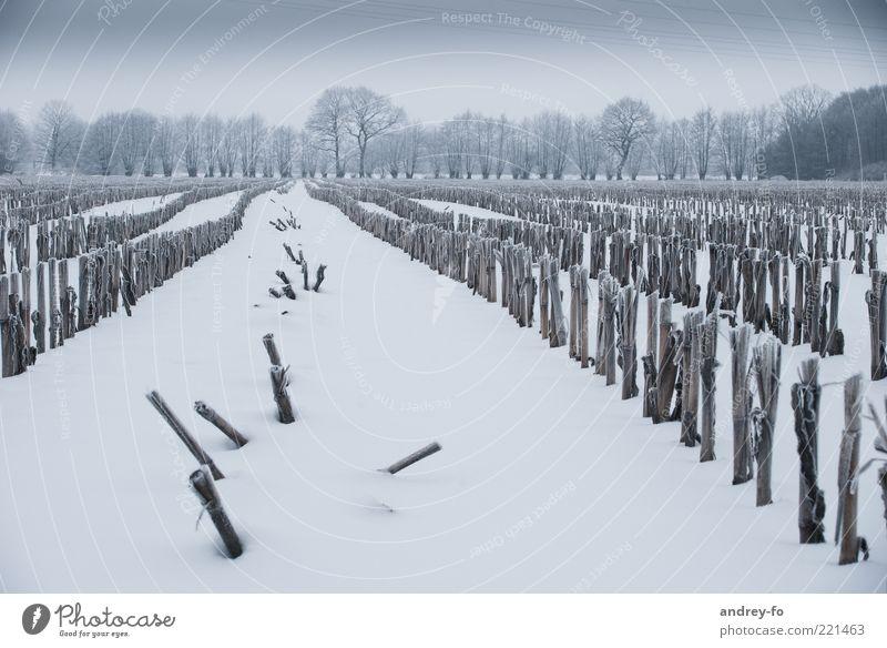 Sky Nature White Green Tree Winter Cold Dark Snow Landscape Emotions Field Horizon Storm Seasons Snowscape
