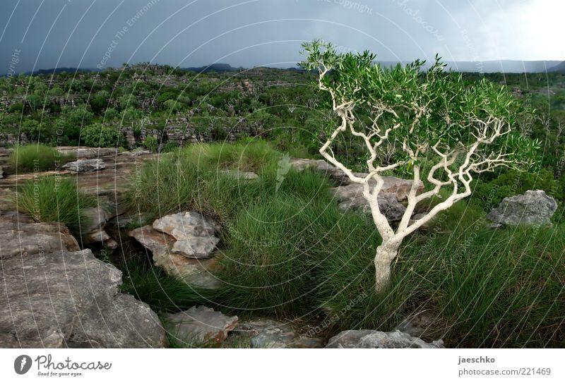 Nature Tree Green Loneliness Far-off places Dark Grass Rain Landscape Environment Rock Esthetic Bushes Authentic Threat Uniqueness