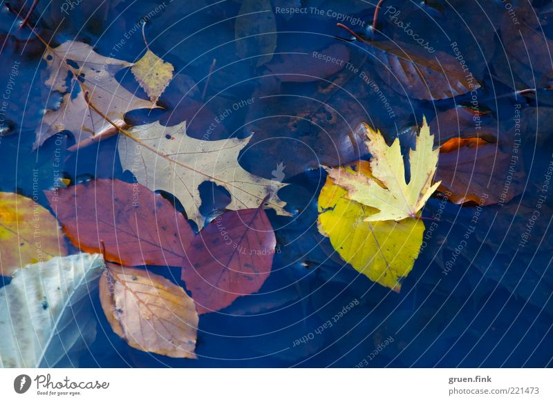 superficial look at autumn Nature Plant Water Autumn Leaf Pond Deserted Collection Esthetic Near Natural Blue Brown Multicoloured Yellow Variable Transience