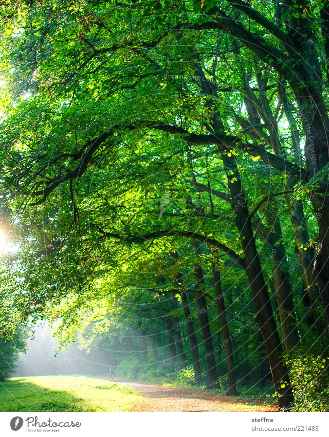 waldi Nature Sunlight Beautiful weather Park Forest Green Romance To go for a walk Bright HDR Colour photo Exterior shot Back-light Sunbeam Leaf Lanes & trails