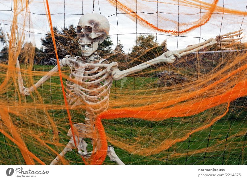 skeleton Hallowe'en Decoration Plastic Hang Creepy Trashy Orange Fear Horror Bizarre Leisure and hobbies Skeleton creep Death's head hung Colour photo