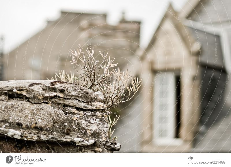 Room with a view Plant Grass Wall (barrier) Wall (building) Window Roof Gable Gray Above Dry Shriveled Breakage Lichen Colour photo Subdued colour Exterior shot