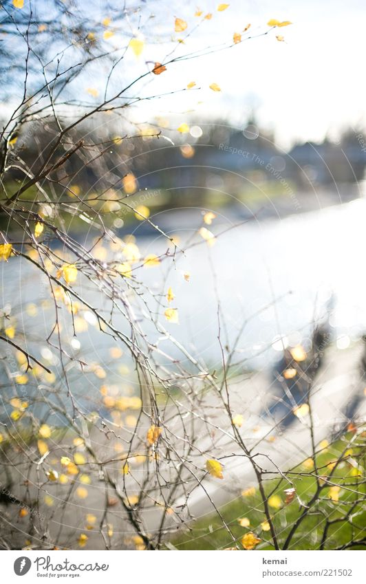 Nature Water Sun Plant Leaf Yellow Autumn Park Landscape Coast Environment Growth River Climate Branch Blossoming