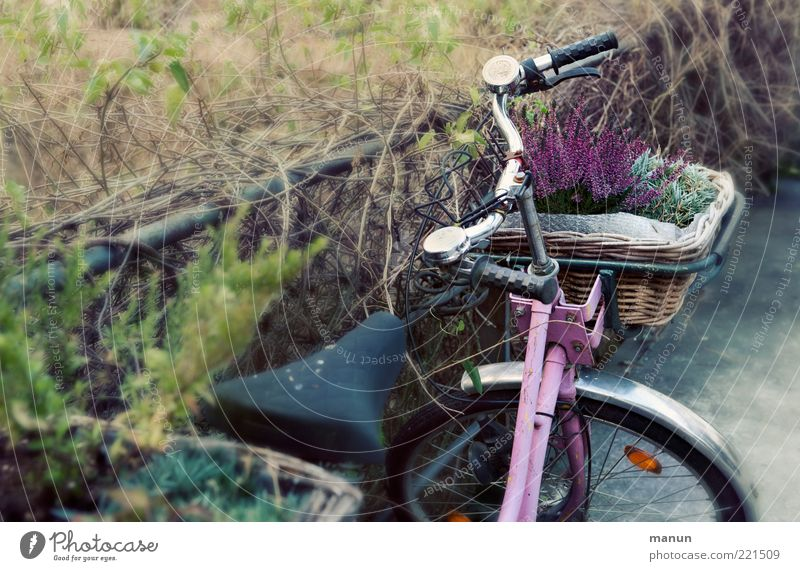 Old Flower Plant Autumn Grass Bicycle Pink Retro Romance Stand Mobility Nostalgia Parking Basket Means of transport Bicycle handlebars