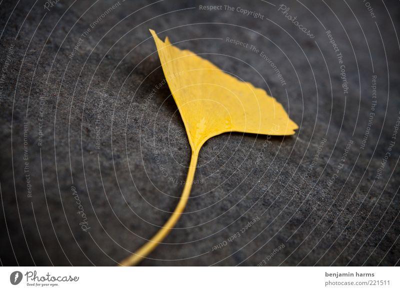 Nature Leaf Yellow Autumn Gold Under Shriveled Autumn leaves