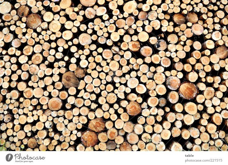 in front of the hut Environment Nature Plant Tree trunk Wood Lie Fat Thin Gigantic Natural Arrangement Transience Change Stack of wood Round Muddled