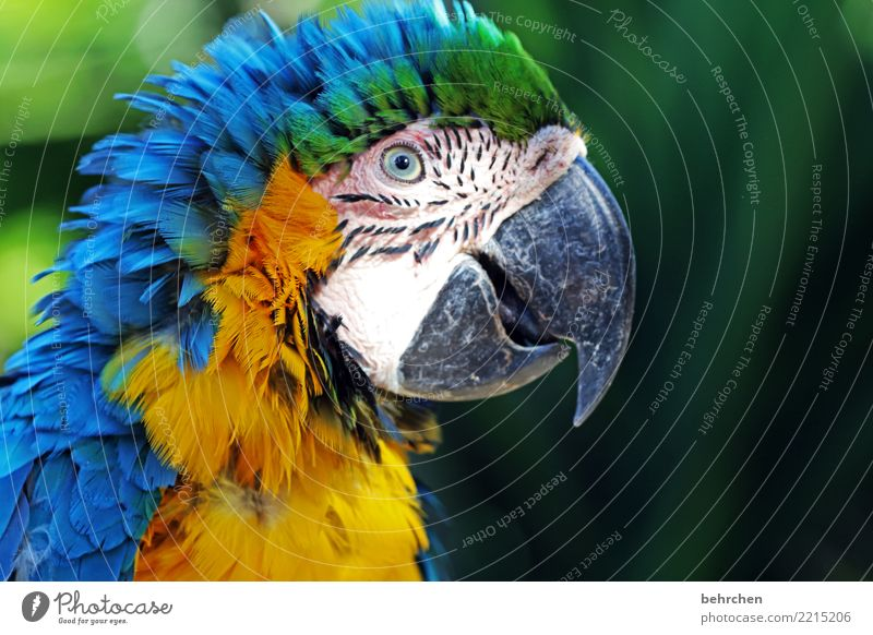 Nature Vacation & Travel Beautiful Animal Far-off places Eyes Exceptional Tourism Freedom Bird Trip Wild animal Feather Adventure Fantastic Wing
