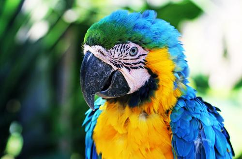 bird of paradise Vacation & Travel Tourism Trip Adventure Far-off places Freedom Bird Animal face Wing Zoo Parrots Macaw Feather 1 Exceptional Exotic Fantastic