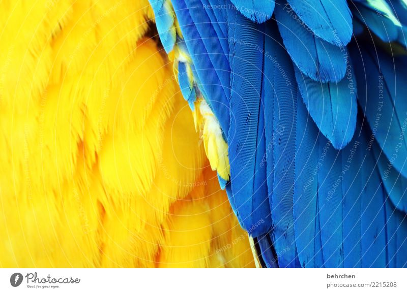 plumage Vacation & Travel Tourism Trip Adventure Far-off places Freedom Safari Wild animal Bird Wing Zoo Parrots Macaw Feather 1 Animal Exceptional Exotic