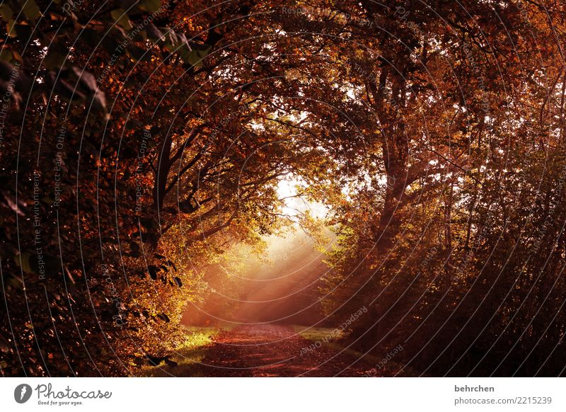 glimmer of hope Nature Landscape Sun Autumn Fog Tree Bushes Leaf Forest Beautiful Brave Hope Belief Sadness Grief Autumn leaves Footpath Warmth To go for a walk