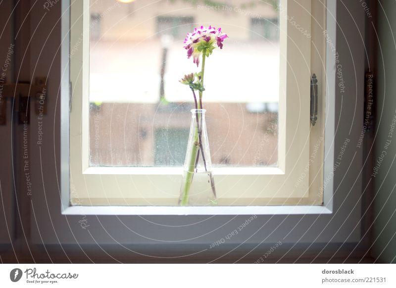 Flower Window Elegant Hope Esthetic Decoration Stalk Fragrance Harmonious Vase Arrange Window board Window frame View from a window