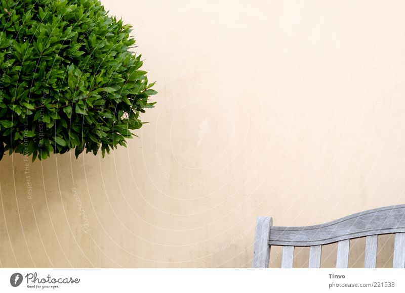 Tree Green Plant Wall (building) Wood Wall (barrier) Terrace Furniture Seating Bleak Clear Light Partially visible Foliage plant Bushy Copy Space top