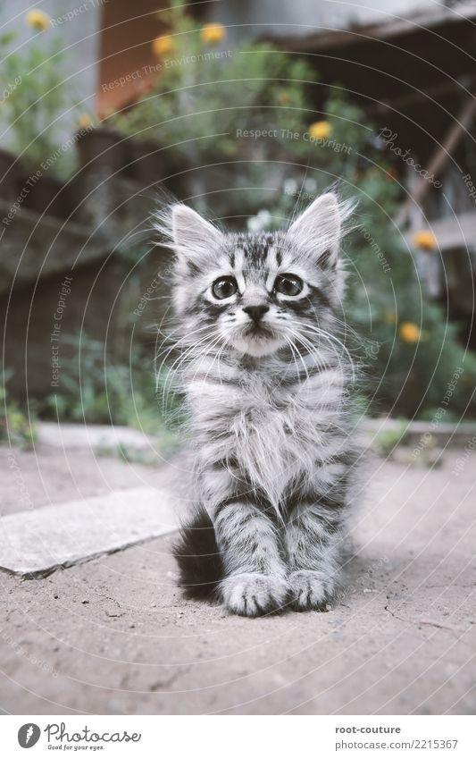 Cat Nature Beautiful Animal Baby animal Life Gray Sit Cute Curiosity Soft Break Pet Pelt Animal face