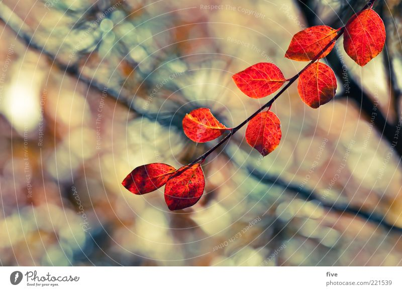 red leaves Nature Plant Autumn Bushes Leaf Foliage plant Red Moody Branch Colour photo Exterior shot Close-up Detail Light Sunlight Blur Shallow depth of field