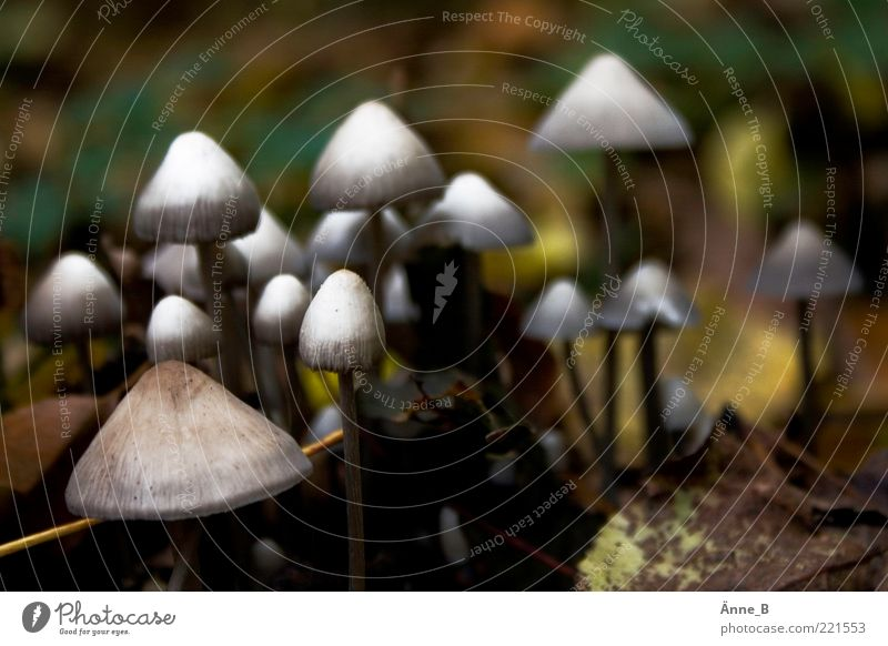 invasion Mushroom Environment Nature Elements Earth Autumn Growth Esthetic Small Point Brown Yellow Green Calm Mushroom cap Many Colour photo Subdued colour