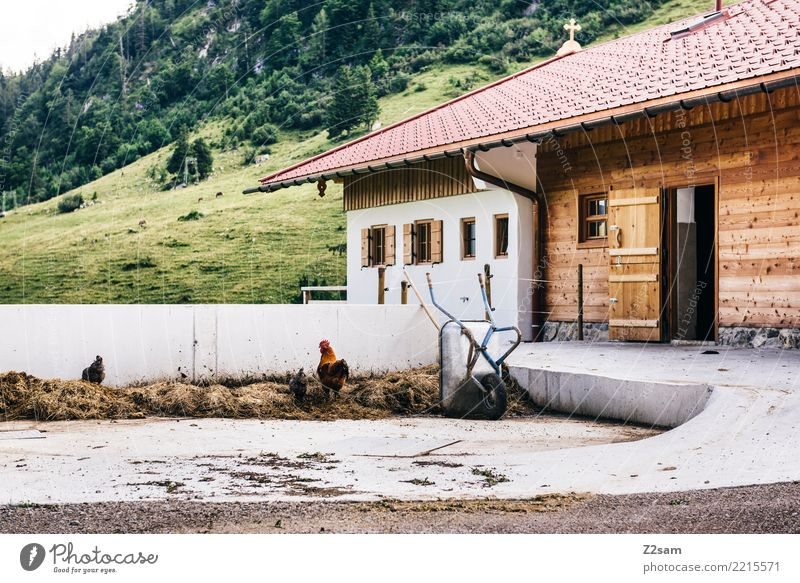 Nature Vacation & Travel Relaxation Animal Calm Mountain Environment Natural Happy Together Contentment Idyll Alps Farm Hut Relationship