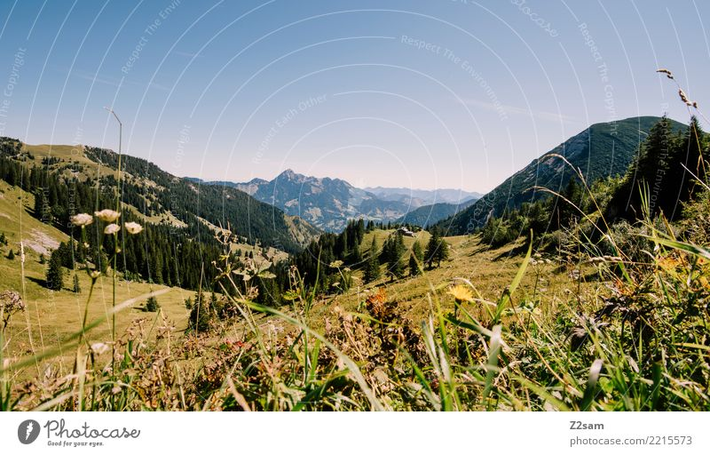 direction sudelfeld Mountain Hiking Environment Nature Landscape Summer Beautiful weather Grass Meadow Alps Peak Far-off places Gigantic Tall Natural Blue Green