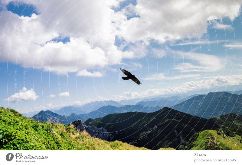 Bird over the Bavarian Alps Mountain Nature Landscape Summer Beautiful weather Meadow Flying Esthetic Elegant Free Gigantic Natural Moody Calm Relaxation