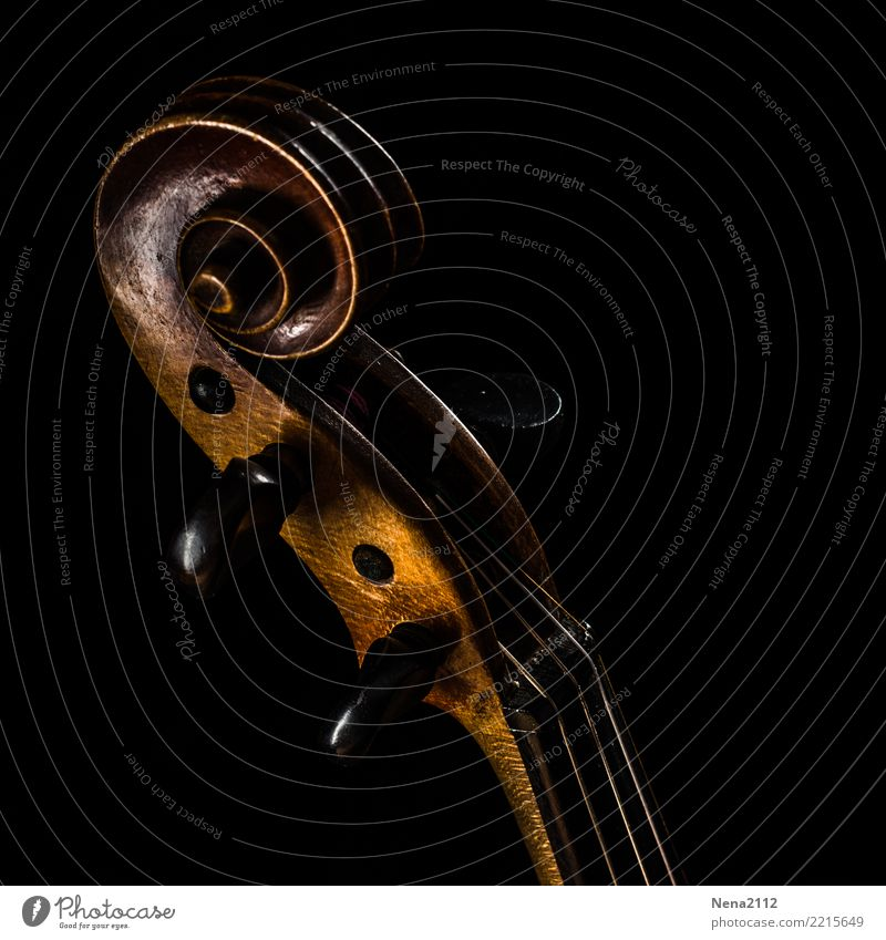 Violin - Q7 Art Music Listen to music Concert Outdoor festival Stage Opera Band Musician Orchestra Cello Wood String instrument violin snail Swirl Noble