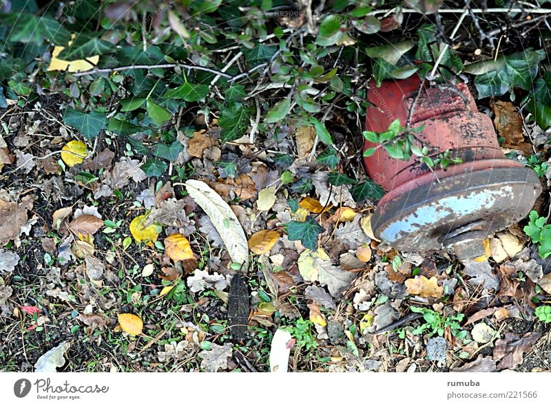 hydrant Nature Water Autumn Leaf Metal Rust Multicoloured Green Red Fire hydrant Hedge Water supply Colour photo Exterior shot Inverted Deserted Old Day