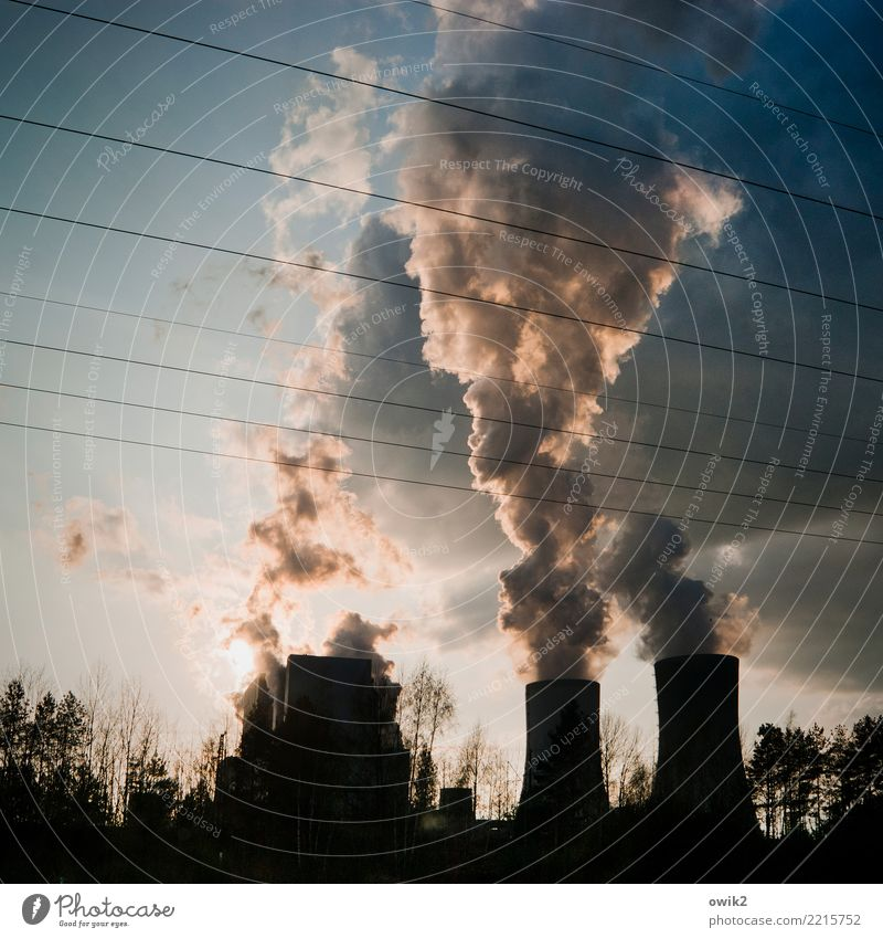 Sky Tree Clouds Work and employment Air Energy industry Technology Bushes Large Threat Cable Risk Economy Destruction Bleak Environmental pollution