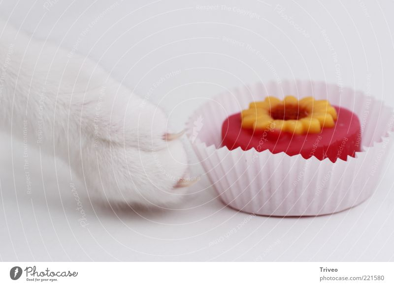 Cat White Beautiful Red Animal Yellow Movement Funny Bright Pink Gold Food Elegant Esthetic Sweet Touch