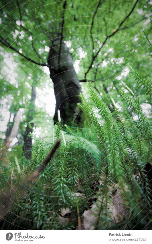 above us only trees Environment Nature Plant Elements Earth Summer Tree Leaf Foliage plant Wild plant Forest Observe Blossoming Discover Illuminate Growth