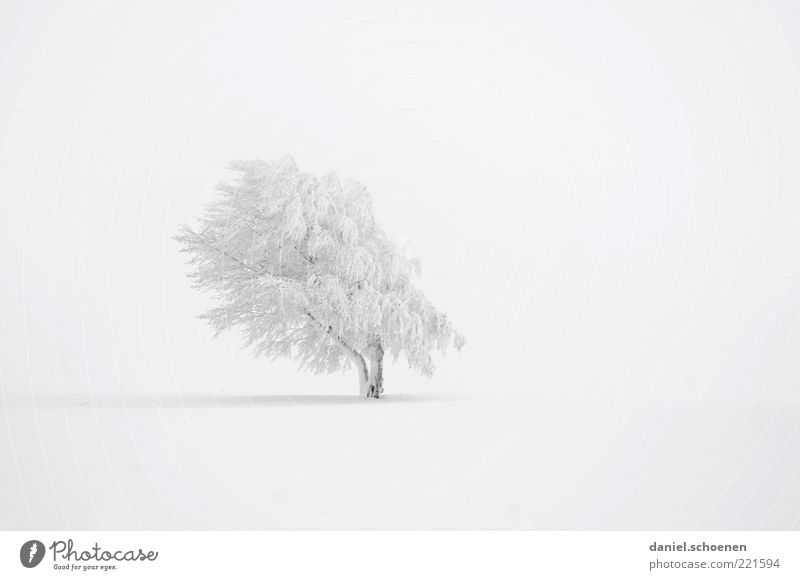 much white, right top left down Winter Snow Climate Weather Wind Ice Frost Tree Bright White Calm Beech tree Subdued colour Deserted Copy Space left