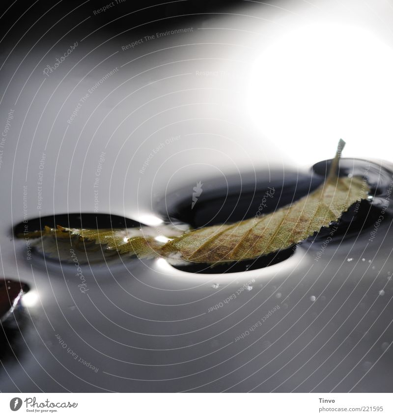 Leaf is carried by water surface Water Autumn Dark Wet Surface of water Surface tension Autumn leaves Float in the water Swimming & Bathing 1 Blur Close-up