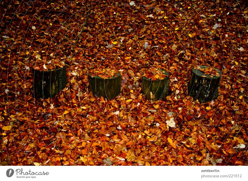 the fantastic four Nature Earth Autumn Weather Tree Forest Longing Loneliness Apocalyptic sentiment Transience November Autumn leaves Leaf Tree stump Dull 4