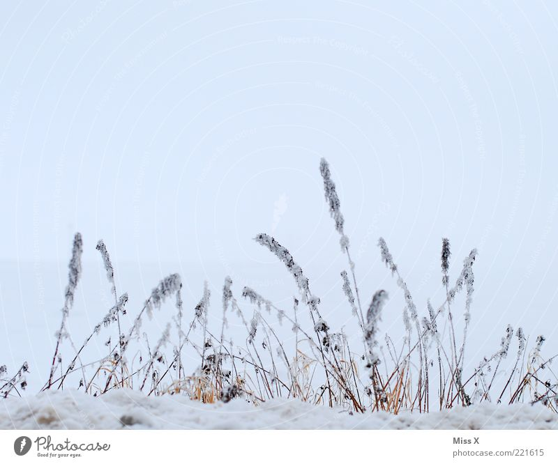 Nature Sky White Winter Cold Grass Ice Frost Gloomy Bushes Frozen