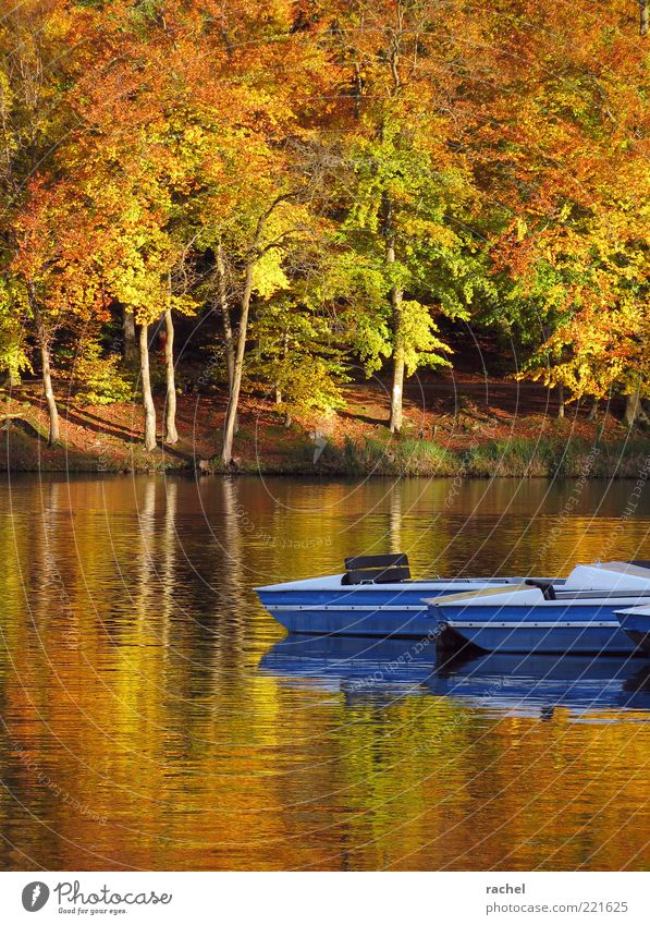 Nature Water Blue Autumn Lake Romance Change Transience Seasons Lakeside Tree trunk Beautiful weather Watercraft Autumn leaves Float in the water Plant
