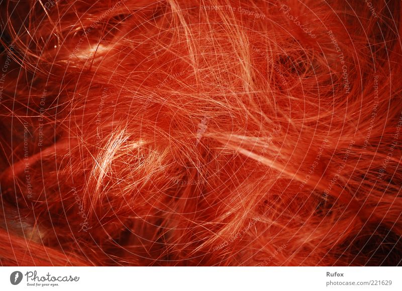 Red Hair and hairstyles Line Free Thin Uniqueness Whimsical Chaos Exotic Long-haired Red-haired Human being Close-up Copy Space Wig Tousled