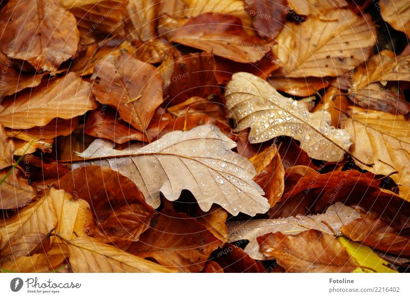 Ephemeral Environment Nature Plant Earth Autumn Leaf Forest Near Wet Natural Brown Autumnal Autumn leaves Autumnal colours Autumnal weather Drop Dew