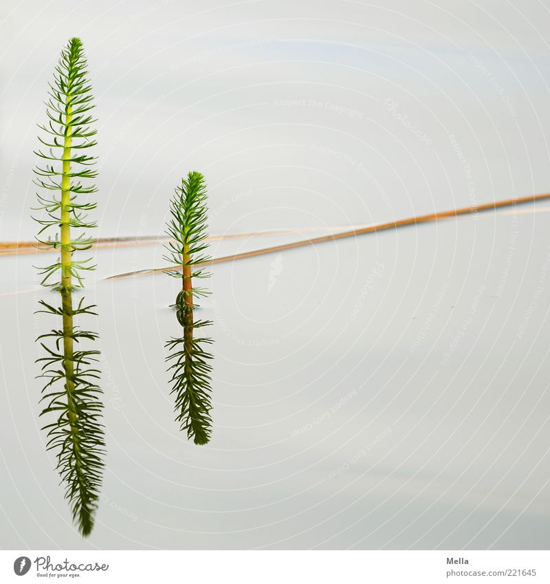 Nature Water Plant Calm Lake Environment Growth Natural Blade of grass Pond Twig Foliage plant Float in the water Surface of water Part of the plant