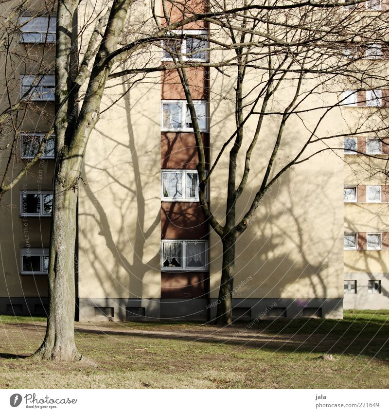 Tree Plant House (Residential Structure) Meadow Autumn Window Grass Building Architecture High-rise Facade Gloomy Manmade structures Leafless