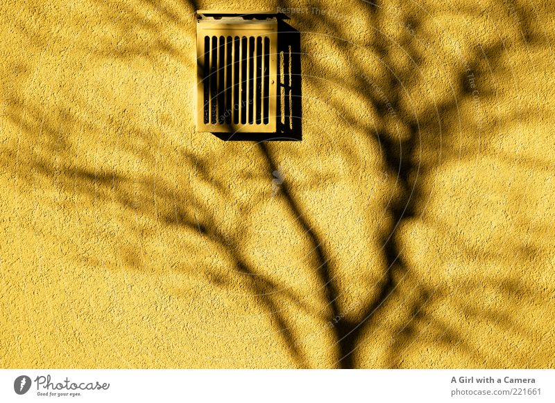shadow on the wall - LT Ulm 14.11. Wall (building) Ventilation Grating Illuminate Yellow Gray Black Silhouette Branch Tree Colour photo Multicoloured