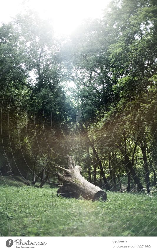 forgotten Environment Nature Tree Meadow Forest Esthetic Bizarre Uniqueness End Discover Mysterious Life Sustainability Calm Stagnating Survive Past Transience