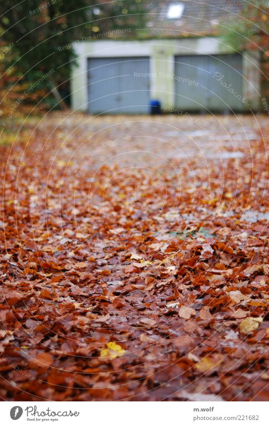 ...in autumn House (Residential Structure) Garage Garage door Nature Autumn Weather Bad weather Leaf Germany Deserted Wall (barrier) Wall (building) Facade Roof