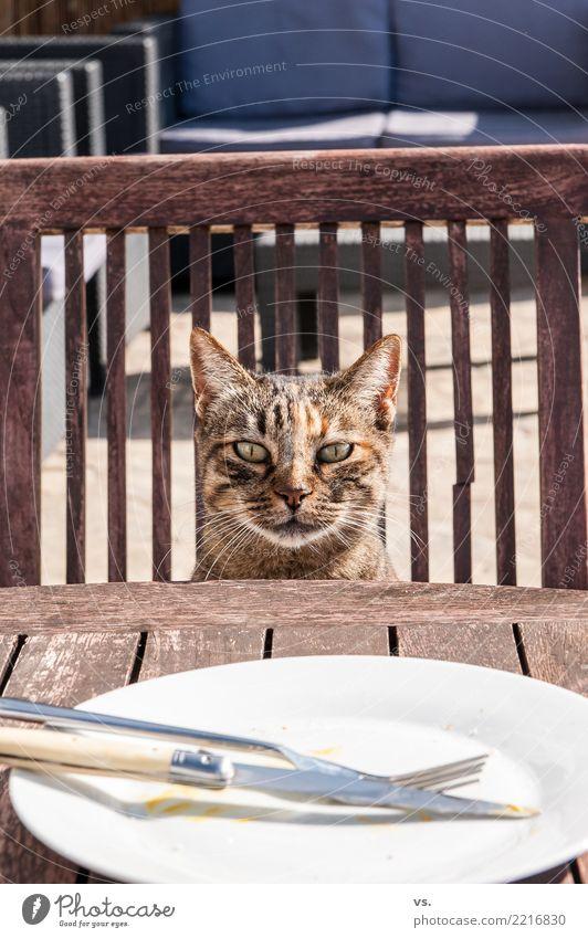 Cat Summer Animal Eating Garden Food Nutrition Wait Drinking Village Pet Restaurant Organic produce Crockery Appetite Plate