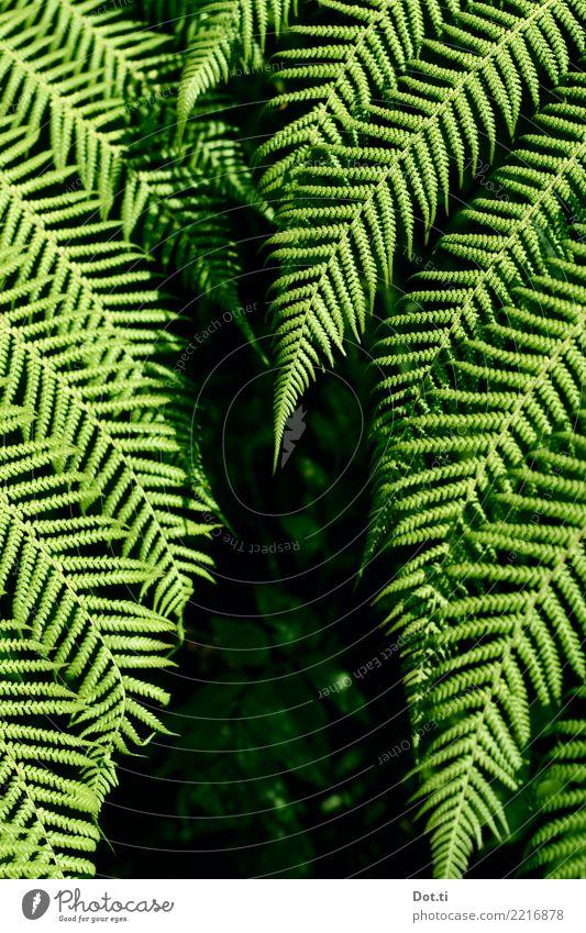 fern Nature Plant Fern Leaf Foliage plant Green Fern leaf Forest Colour photo Exterior shot Contrast