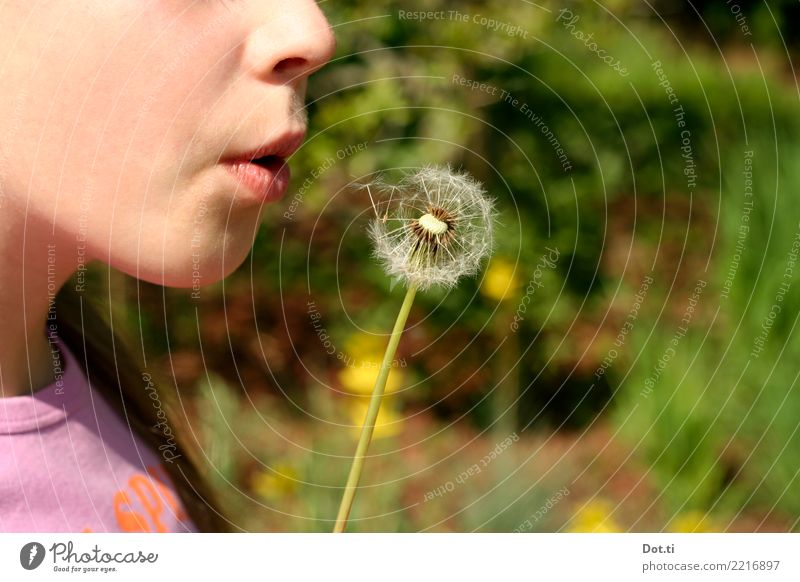 Child Human being Nature Plant Summer Flower Joy Girl Spring Feminine Playing Infancy Mouth 8 - 13 years Lips Dandelion