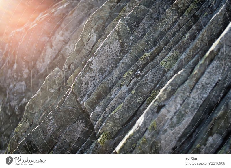 Rock n' Roll Climbing Climbing wall Environment Nature Autumn Moss Blossoming Glittering Illuminate Old Gloomy Dry Colour photo Exterior shot Copy Space right