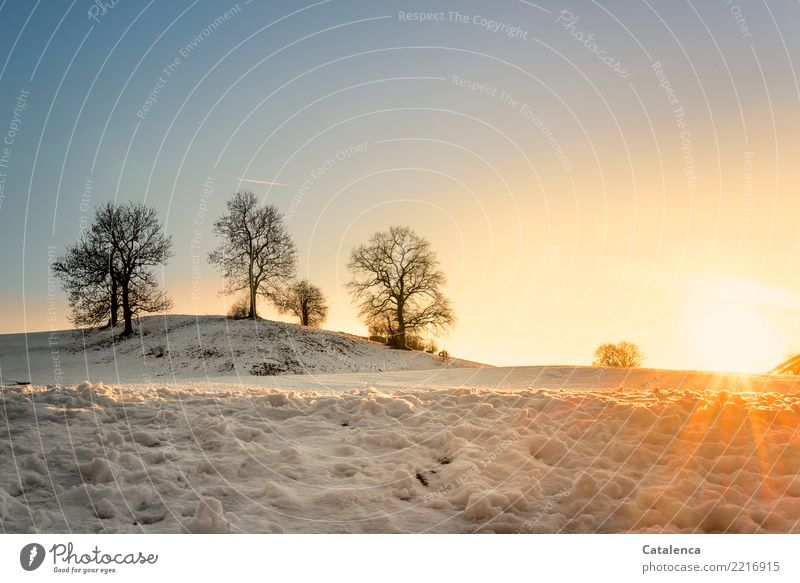 The last rays of the sun Nature Landscape Cloudless sky Horizon Sunrise Sunset Winter Beautiful weather Snow Tree Meadow Hill Glittering Cold Blue Yellow Orange
