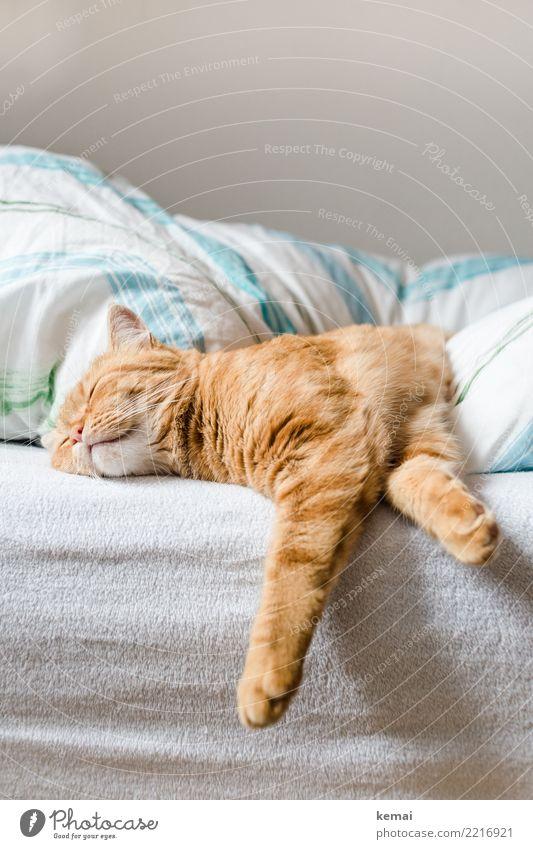 Cat Relaxation Animal Calm Lifestyle Happy Orange Living or residing Flat (apartment) Contentment Leisure and hobbies Lie Authentic Joie de vivre (Vitality)