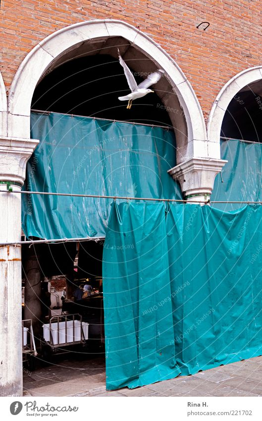 Freedom II Rialto Venice Old town Deserted Pigeon 1 Animal Flying Blue Red Markets Escape Flee Colour photo Copy Space right Drape Bird Old building