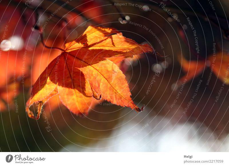 Nature Plant Tree Leaf Life Yellow Environment Autumn Natural Garden Gray Brown Orange Moody Illuminate Esthetic